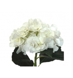 Hortensia 48cm. crema