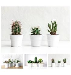 Cuadro cactus 60x40 cm.