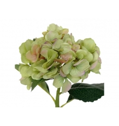Hortensia 48cm. verde