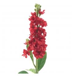 Delphinium  Rojo