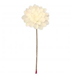 Zinnia 65cm. blanca