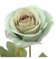 Rosa turquesa