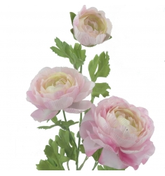 Ranunculus ROSA
