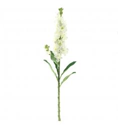 Delphinium  Crema