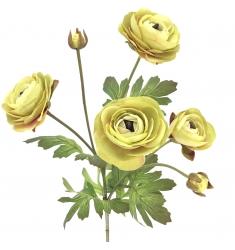 Ranunculus x 4