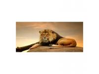 Cuadro alto brillo ANIMALES 2- 60x120cm.