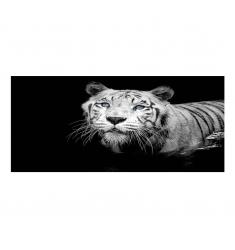 Cuadro alto brillo ANIMALES 13- 60x120cm.