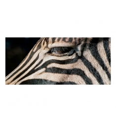 Cuadro alto brillo ANIMALES 78 -50x150cm.