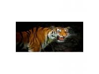 Cuadro alto brillo ANIMALES 11-50x150cm.